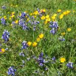 Grasses, Eviner