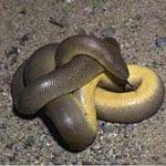 Montane Hardwood Forest Reptiles