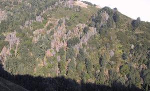 oak tree diseases image