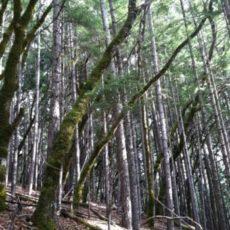 conifer encroachment image