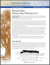 burned oaks